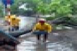 """Vì sao cây xanh trên phố Hà Nội dễ """"ngã gục"""" khi mưa giông?"""